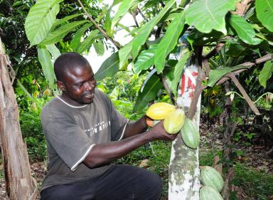 Towards sustainable cocoa in Côte d'Ivoire