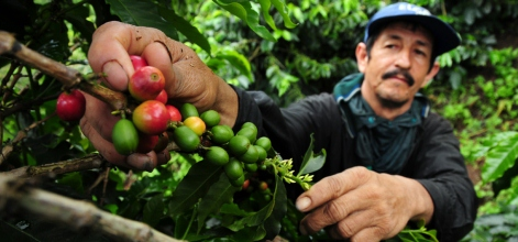 From cocoa to coffee cup: Agribusinesses take a landscape approach to sustainable sourcing