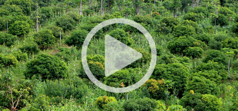 (VIDEOS) The Landscape Approach: What are ICRAF scientists saying?