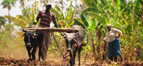 Climate finance that makes sense to farmers